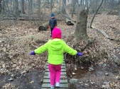 Going on a Fairy Hunt